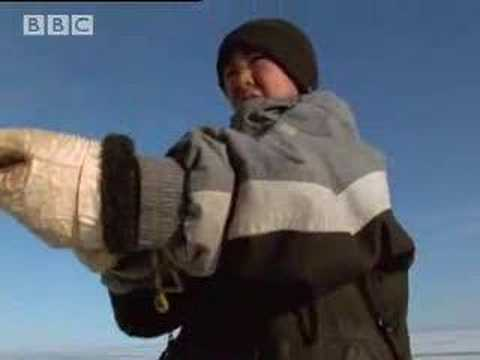 Narwhale hunting - A Boy Among Polar Bears - BBC