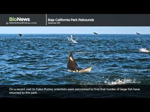 Science Bulletins: Baja California Park Rebounds