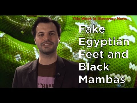 TWiDN: Fake Egyptian Feet and Black Mambas