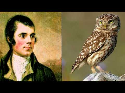 Robert Burns ~ To The Owl ~ Poem