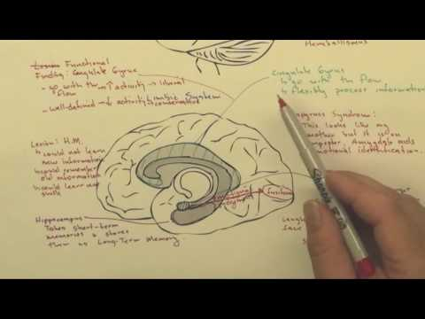 Part 6:  Functional Brain Areas