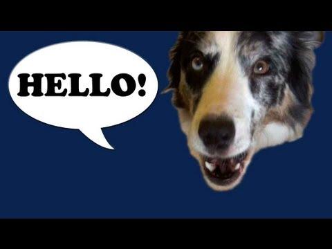 Splash says Hello- talking dog trick training puppy
