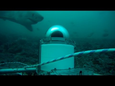 Shark Spy | Air Jaws Apocalypse - Shark Week 2012