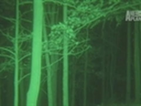 Search for the Ohio Bigfoot | Finding Bigfoot