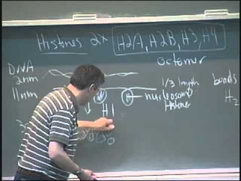 Saylor BIO301: Nuclear and chromatin structure