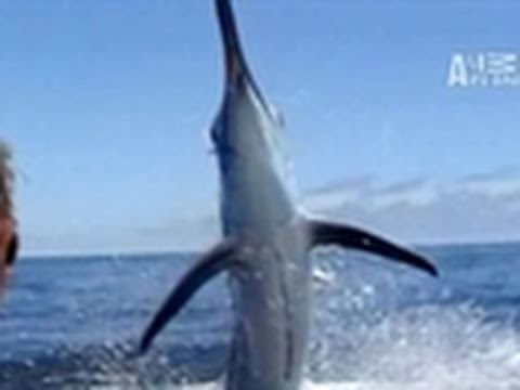Untamed & Uncut- Marlin Impales Face