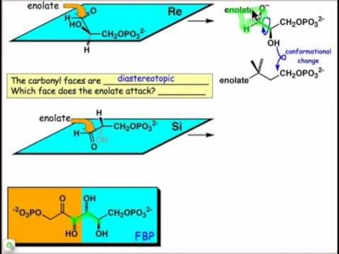 Which Face of the Carbonyl?