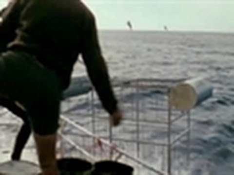 Shark Week 2011 - The Very First Shark Cage
