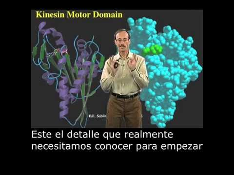 Ron Vale (UCSF) Part 1: Introduction to Motor Proteins with Spanish Subtitles