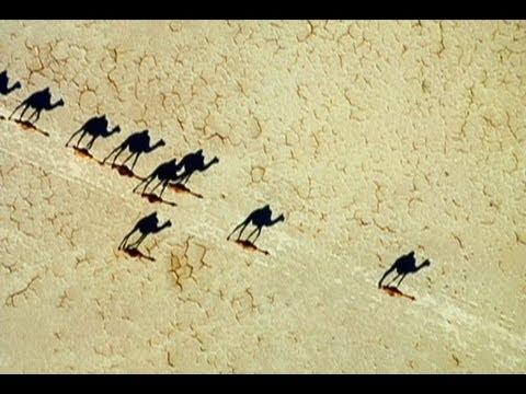 Surprising Photo: Camel Illusion