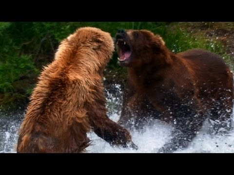World's Deadliest - Grizzly Bear Attacks Prey