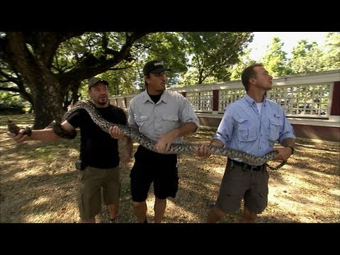 Python Hunters - Pythons in the Park
