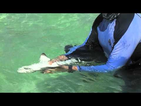 The World: Eric Stroud and T. J. Ostendorf Demonstrate How Sharks React to Magnets