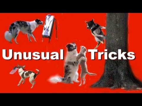Unusual Dog Tricks