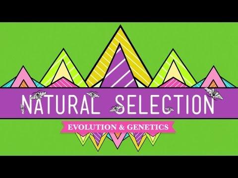 Natural Selection - CrashCourse Biology #14