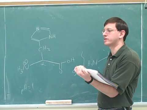Organic chemistry: Amino acids and peptides (9)