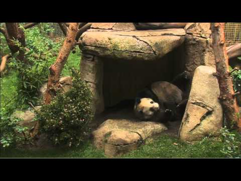 Panda Exhibit Spruce Up