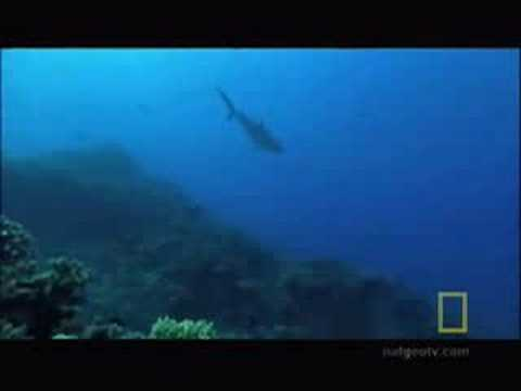Shark Pit Diving
