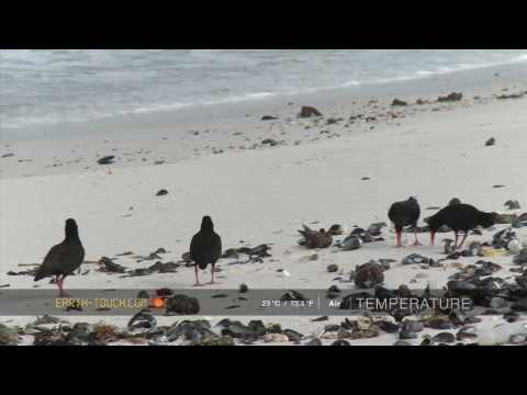 Territorial birds chase rivals away from their chicks