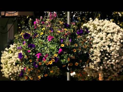 The Home Depot - Flower Power (episode 3) The Science Of Beauty