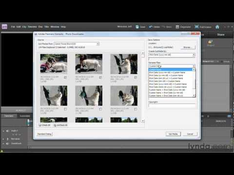 Premiere Elements: How to import video assets | lynda.com tutorial