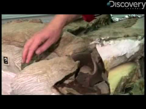 The Dino Mummy, A Tour of the Body
