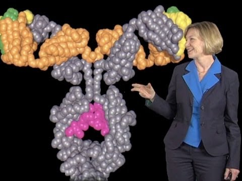 Susan Desmond-Hellmann (UCSF): Herceptin and Drug Development