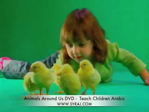 "Watch Arabic ""These Little Chicks"" Children's Song: Teach Kids Colloquial Arabic"