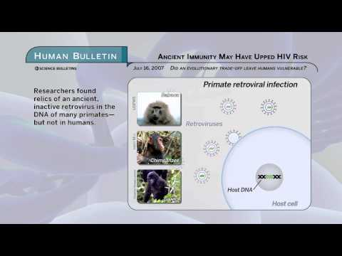 Science Bulletins: Ancient Immunity May Have Upped HIV Risk