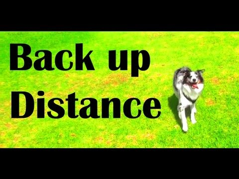 Tips for backing up- clicker dog training tricks