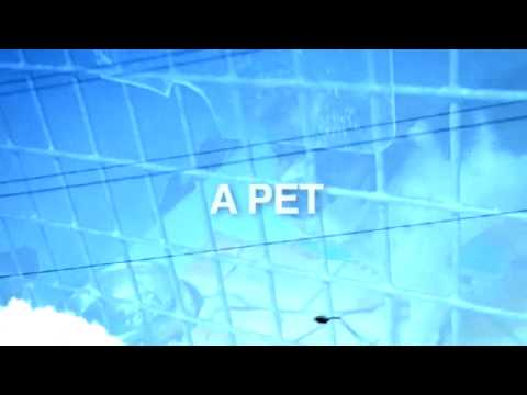 TEDxSydney - Glue Society Video Idea #3 of 8 - Develop a Pet That Talks
