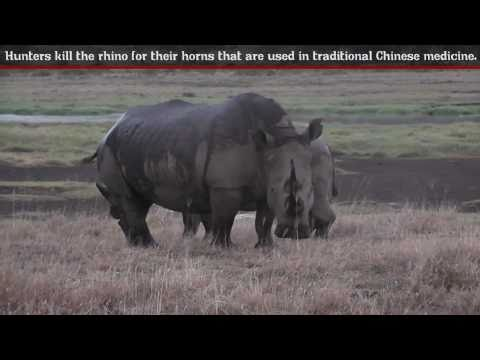 Rhinoceros - Fun Facts