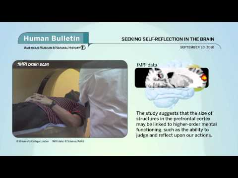 Science Bulletins: Seeking Self-Reflection in the Brain
