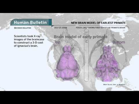 Science Bulletins: New Brain Model of Earliest Primate