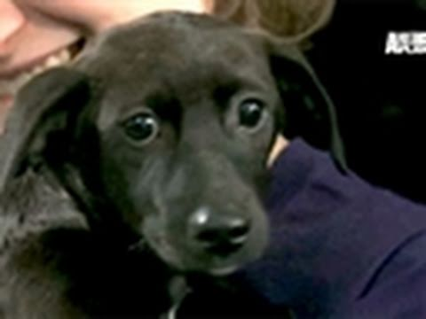 Puppy Bowl: Looking to Adopt?