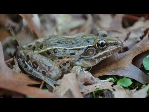 Science Bulletins: New Frog on the Block