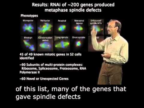 Ron Vale (UCSF) Part 3: Mining the Genome for Mitotic Treasures with English Subtitles