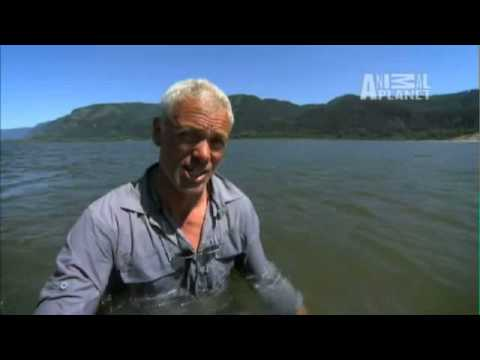 River Monsters: Have a Plan