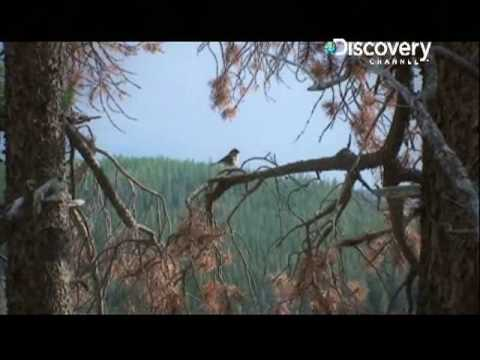 Survivorman - Episode 302 (4)