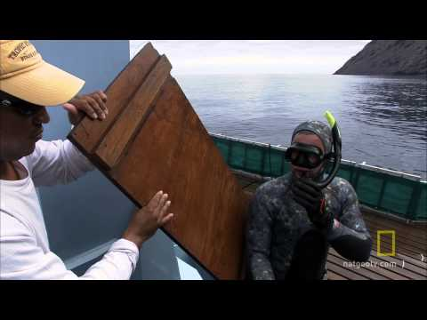 Shark Men - Fresh Kill