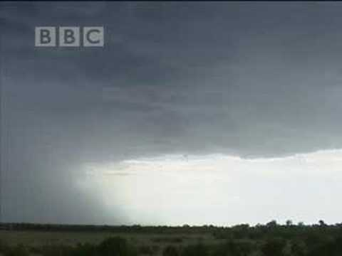 Rainstorm makes hunting difficult for wild cheetahs in the African safari - BBC wildlife