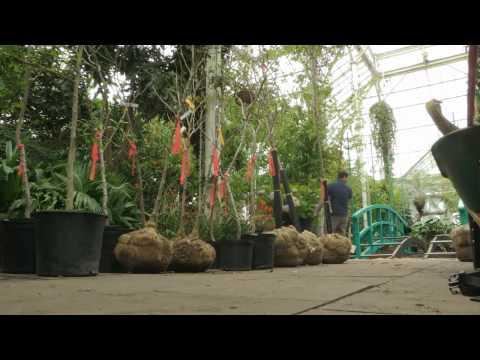 Setting Up Monet's Garden
