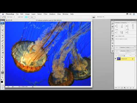 Total Training for Adobe Photoshop CS3: Essentials Ch8 L5. Using the Count Tool