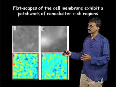 Satyajit Mayor Part 3: Making Rafts in Living Cell Membranes