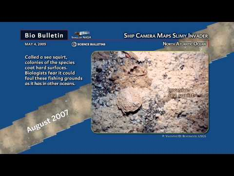 Science Bulletins: Ship Camera Maps Slimy Invader