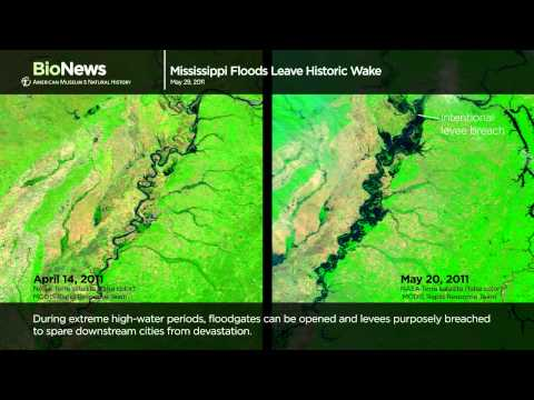Science Bulletins: Mississippi Floods Leave Historic Wake