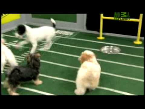 Puppy Bowl Classic - Puppy Action