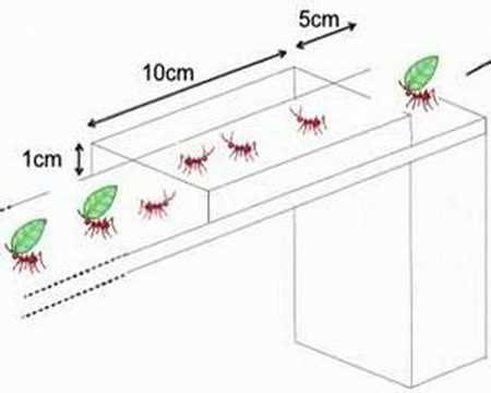 Quick-thinking ants trim foliage to fit