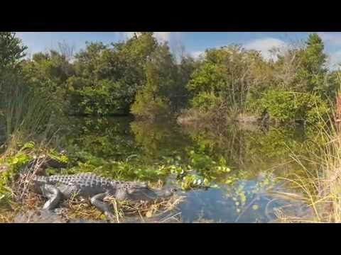The Coolest Stuff on the Planet - The Everglades