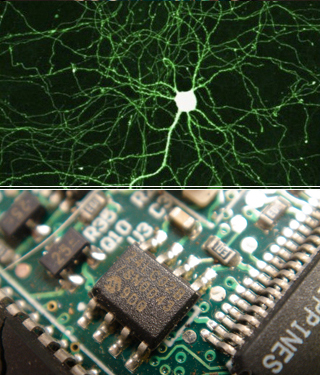 From Molecules to Behavior: Synaptic Neurophysiology